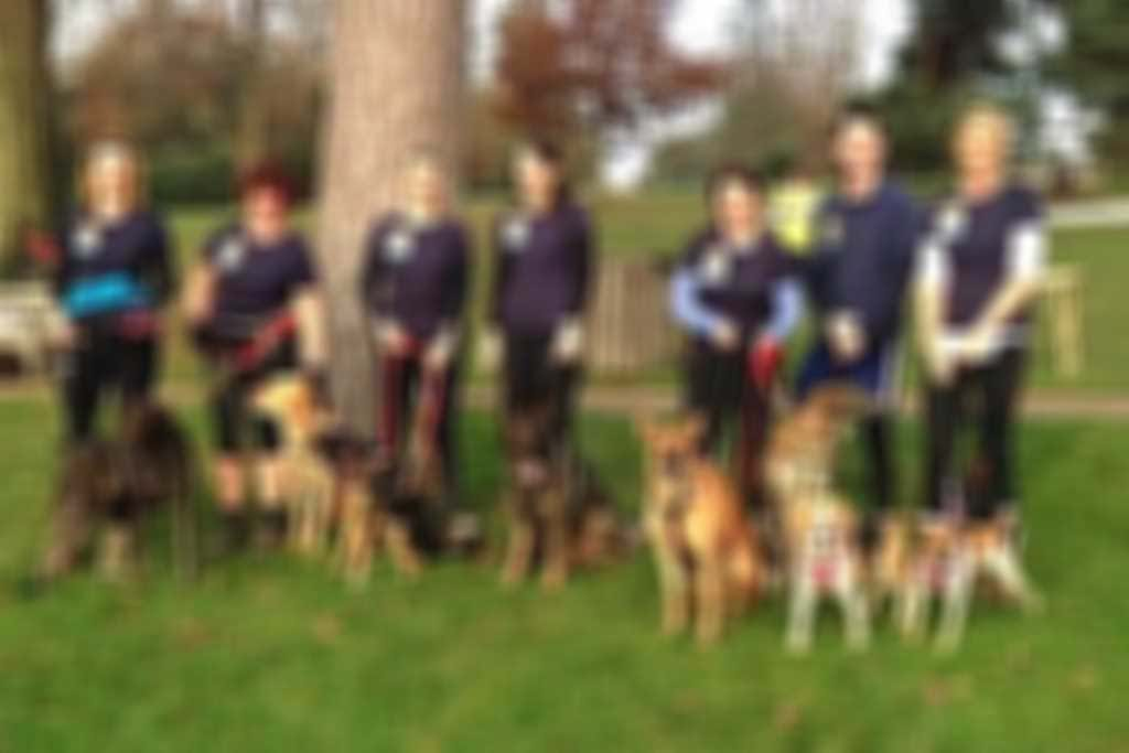 Parkrunjoggydoggy300.jpg blurred out